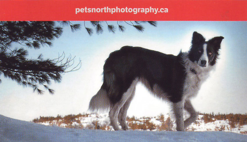 Pets-North-Photography-Sudbury-Ontario